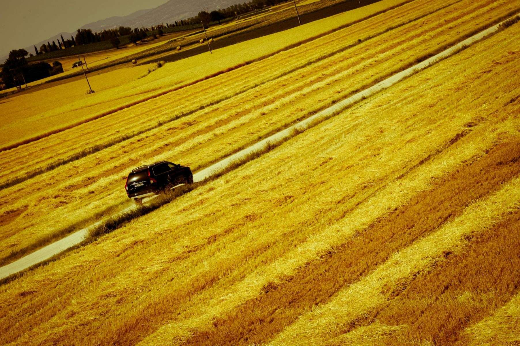 VOLVO XC90 YELLOW FIELD
