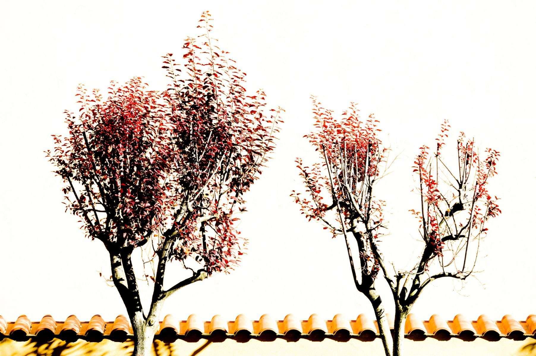 TREE_copymrlukkor