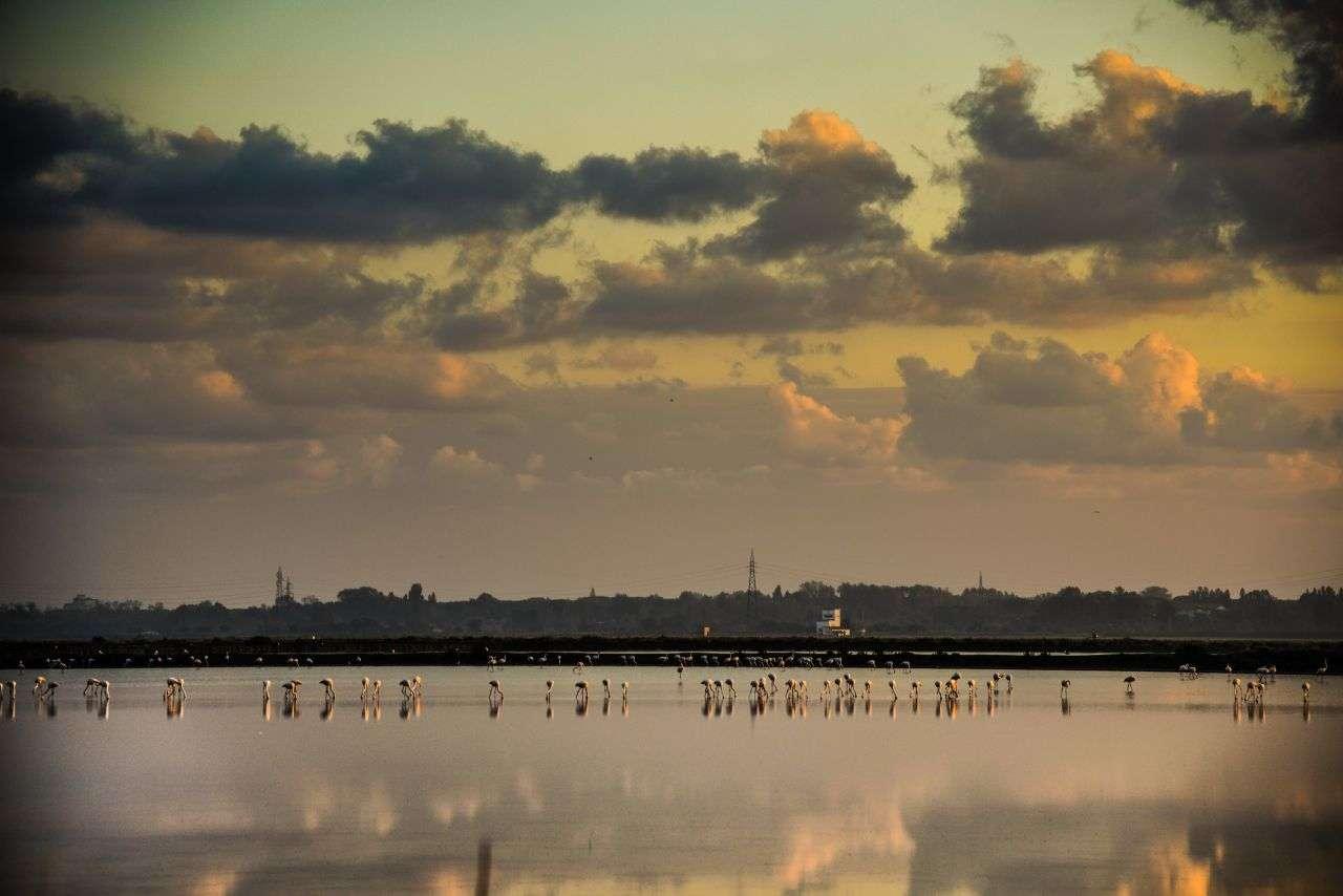 BIRDS - ©lucaromanopix